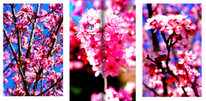 Alexia P.'s Photography of Flowers
